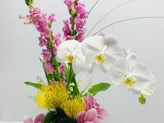 birthday, holiday, celebrate, pin cushion, orchid, phalaenopsis, cymbidium, snapdragon, lily of the valley