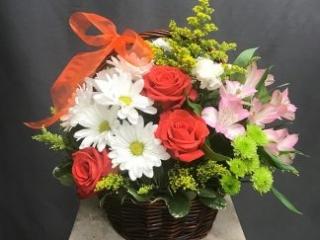 housewarming, new house, congrats, rose, daisy, alstroemeria, mums
