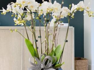 orchid, flowers gift, orchid arrangement