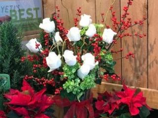 holiday, christmas, rose, ilex berry, mini green